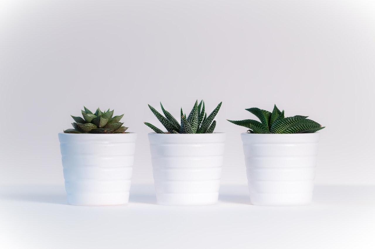 kunstplanten online